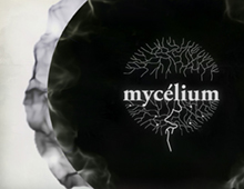 Création de la video Mycelium Art Agency